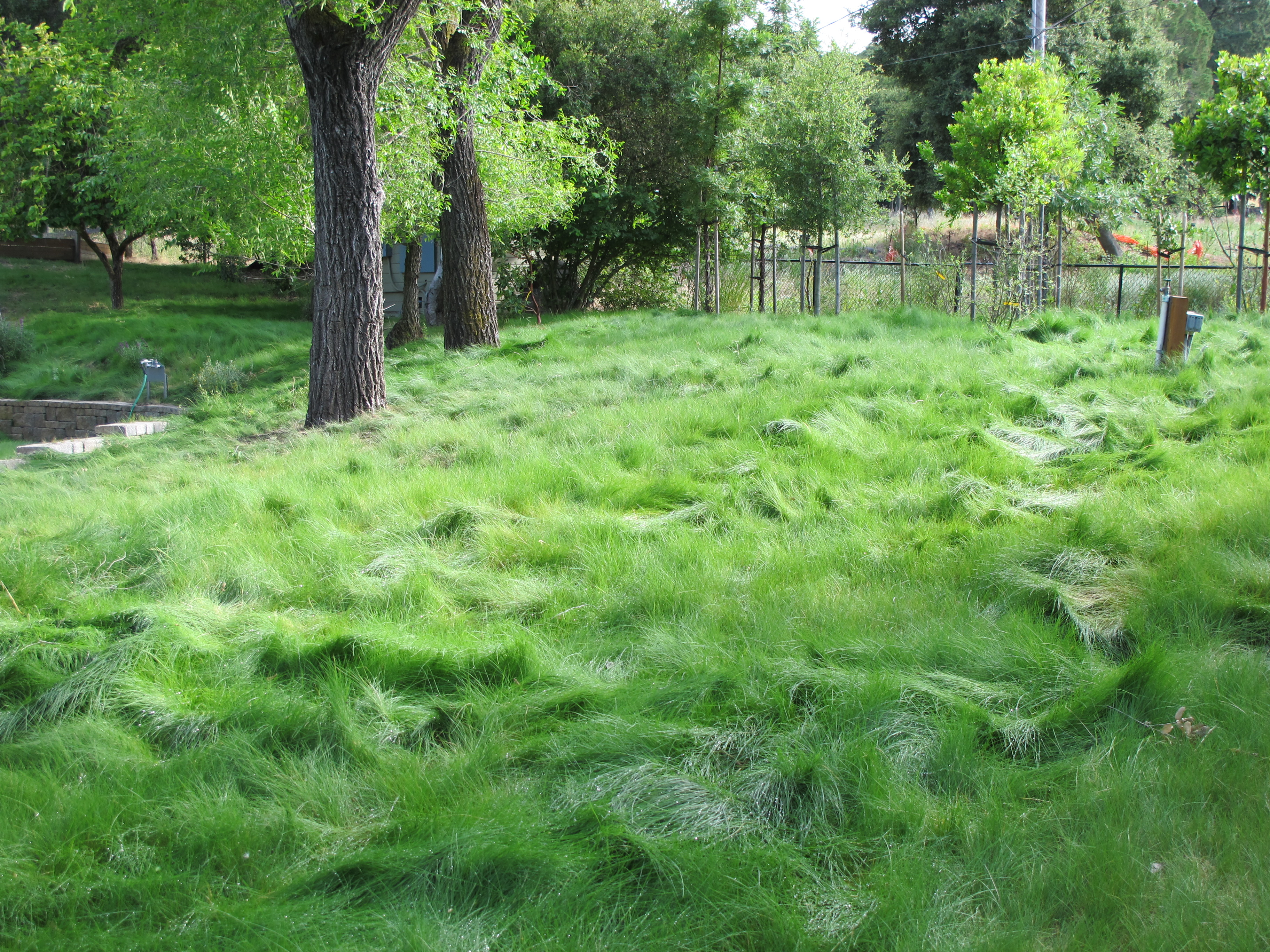 Eco Lawn